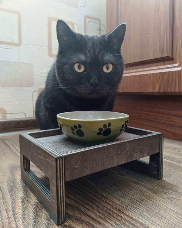 кот ест со столика